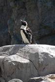 Pinguine am mystischen aquarium — Stockfoto