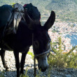 Stock Photo: Donkey carrying backpacks