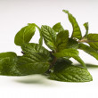 Mint leafs — Stock Photo