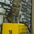 Cat on mailbox — Stock Photo