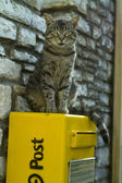 Katze auf Postfach — Stockfoto