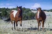 Amazing wild horses — Stock Photo