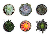 Collection of plants and cacti — Stock Photo