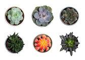 Toplama ve bitkiler kaktüsler — Stok fotoğraf