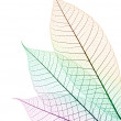 Color leaf — Stock Photo