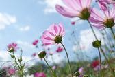 Flor selvagem — Foto Stock