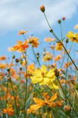 Wild flower — Stock fotografie