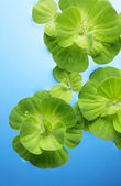 Plants floating on water — Stock Photo