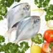 Fish — Stock Photo