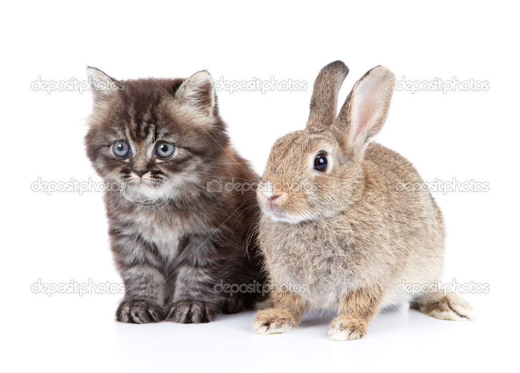 Download image Cat And Rabbit PC, Android, iPhone and iPad. Wallpapers