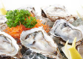 Raw oysters — Stock Photo
