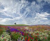 ...spring idyll... — Stock Photo