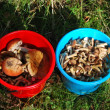 Royalty-Free Stock Photo: Two buckets with mushrooms