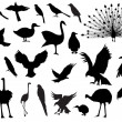 Bird silhouettes — Stock Vector
