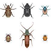 Six vector beetle illustrations — Stock Vector