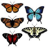 Five vector butterflies — Stock Vector