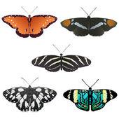 Beş daha kelebeklerin vektör — Stok Vektör