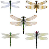 Five vector dragonflies — Stock Vector
