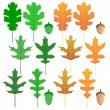 Oak leaf set — Stock Vector