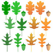 Oak leaf set — Vettoriale Stock