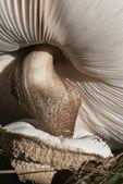 Mushroom close-up — Stock Photo