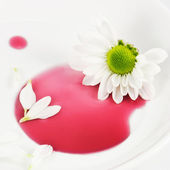 White daisy on the plate — Stock Photo