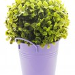 Stock Photo: Violet tinny planter with flower