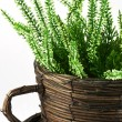 Flower pot with plant — Stock Photo #9106603