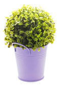 Violet tinny planter with flower — Stockfoto