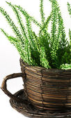 Flower pot with plant — Stock Photo