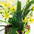 Pot of yellow daffodil flowers — Stok fotoğraf