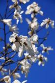 Flower,tree — Stock Photo