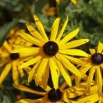 Kwiat w ogrodzie — Stock Photo #8482348