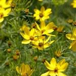 Kwiat w ogrodzie — Stock Photo #8482476