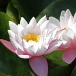 Kwiat w ogrodzie — Stock Photo #8482905