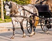 Carruagem do cavalo desenhado — Fotografia Stock