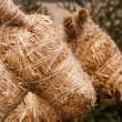 Straw cattles — Stock Photo
