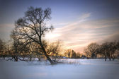Evening winter landscape — Stock Photo
