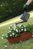 Jardinage — Photo