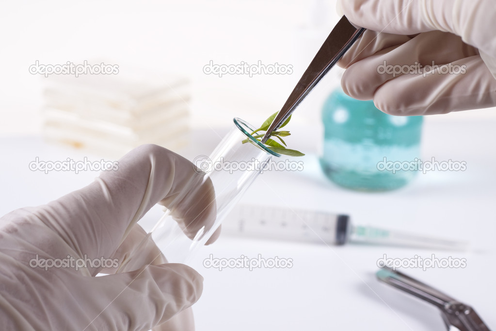 Laboratory cloning experiment on plants — Stock Photo #8386331