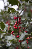 Red berriyes — Stock Photo