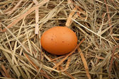 Egg in straw nest — Stock Photo