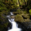 Stock Photo: Bubbling brook in forest