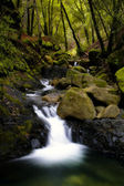 Bubbling brook in a forest — Stock Photo