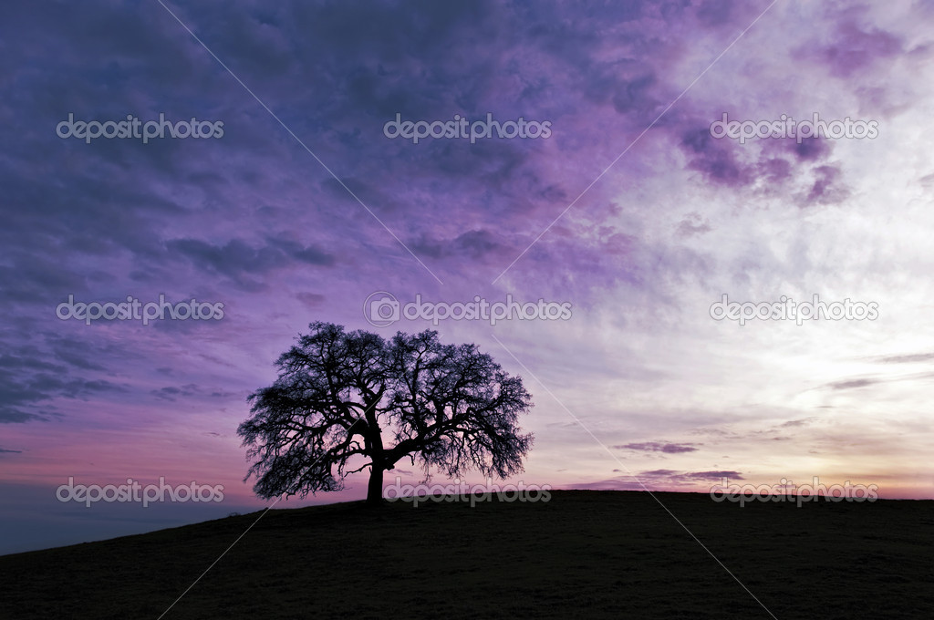 Sunset in the california foothills  — Stock Photo #8471332