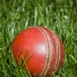 Stock Photo: Cricket ball