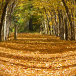 Stock Photo: Autumn trail