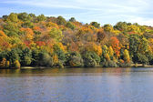 Autumn trees and lake — Stock Photo