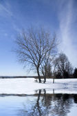 Frozen scene — Stock Photo