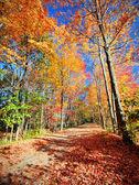 Podzim scénic — Stock fotografie